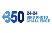 350-24-24 Bird Photo Challenge