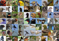 350+species of wild birds photographed in South Africa in one day!
