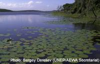 Photo: Sergey Dereliev (UNEP/AEWA Secretariat)