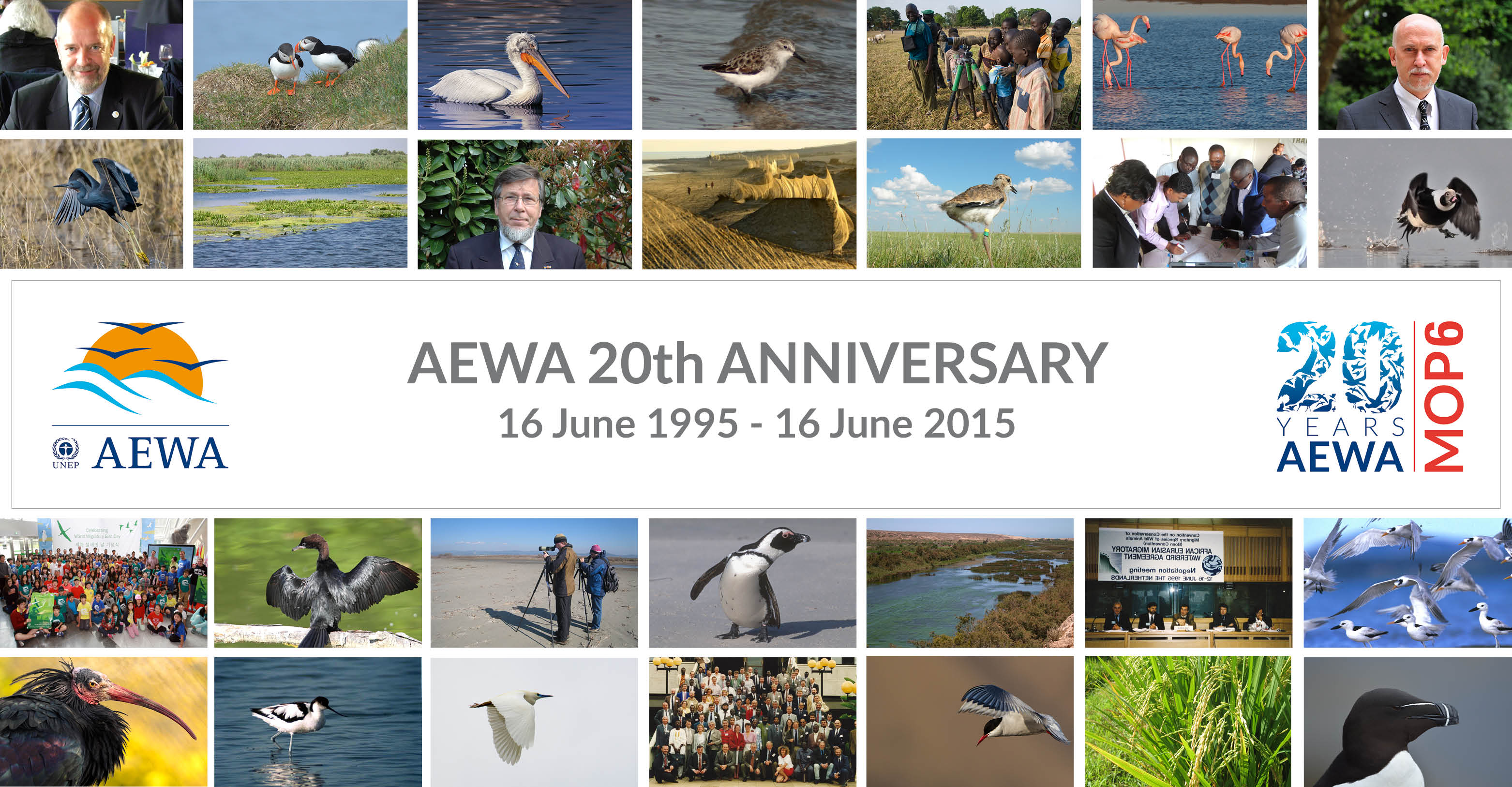 Celebrating 20 Years of Flyway Conservation in Action
