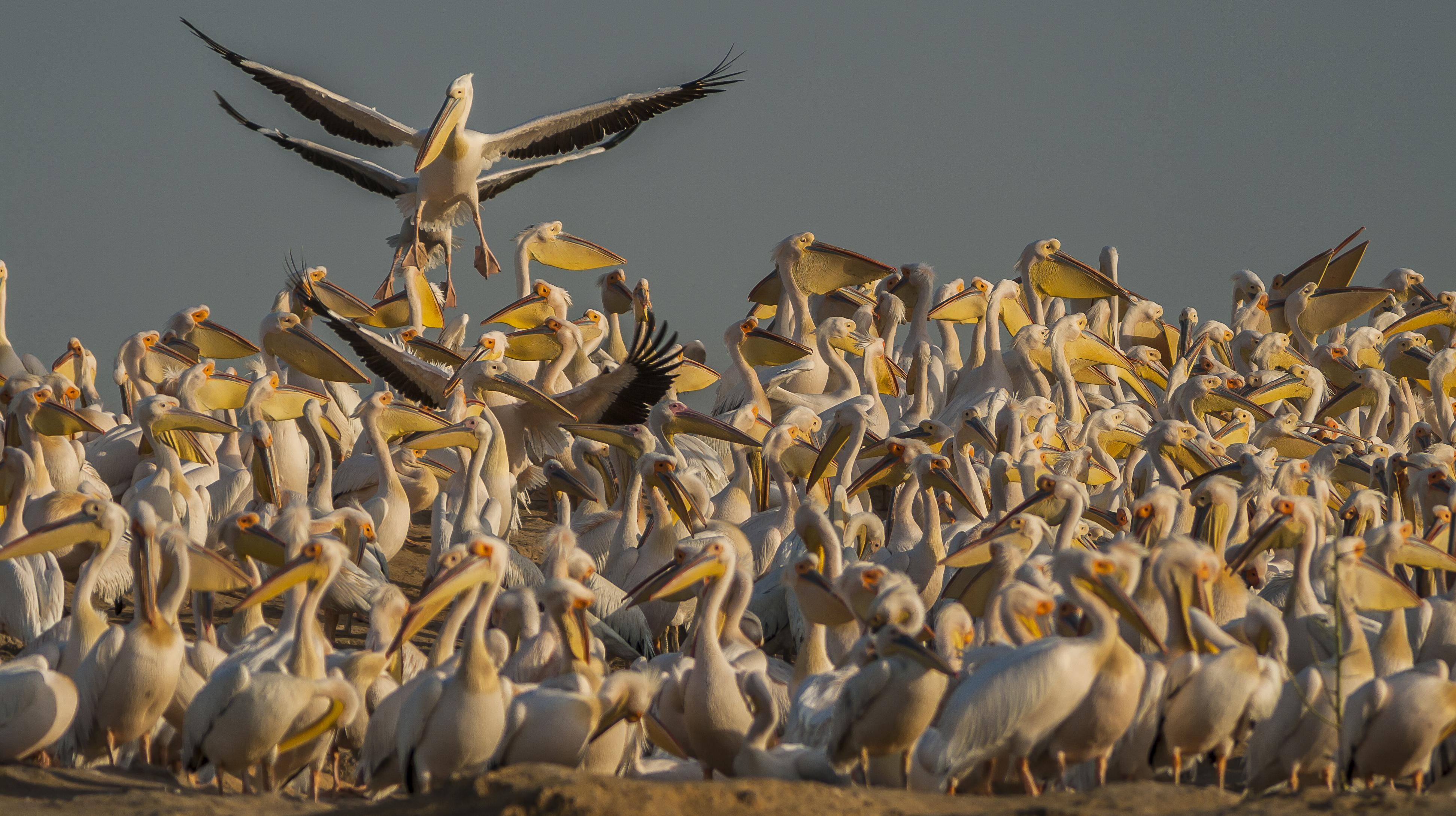 © Sergey Dereliev, www.dereliev-photography.com