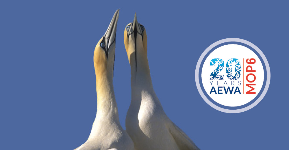Migratory Waterbirds In Focus: AEWA's 6th Meeting of the Parties