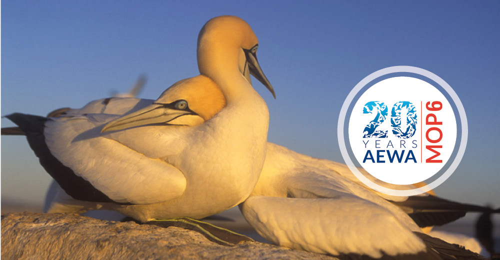 Scientists Point out Possible Solutions to Address Impact of Marine Fisheries on Seabirds