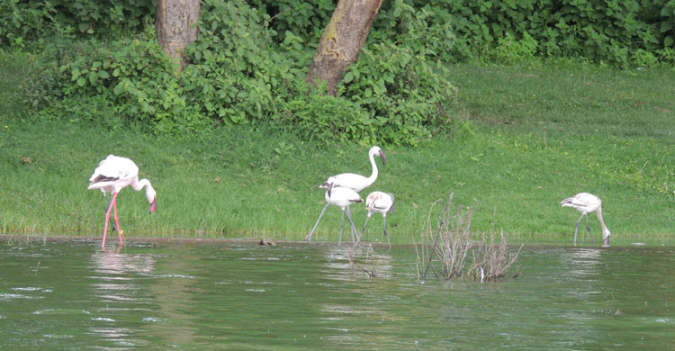 Making Plans for Managing Waterbirds and Wetlands
