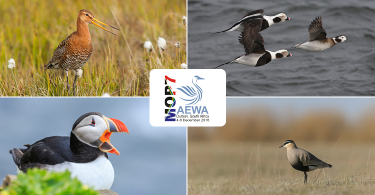 Conservation Status Report Shows Upward Trend for Migratory Waterbirds