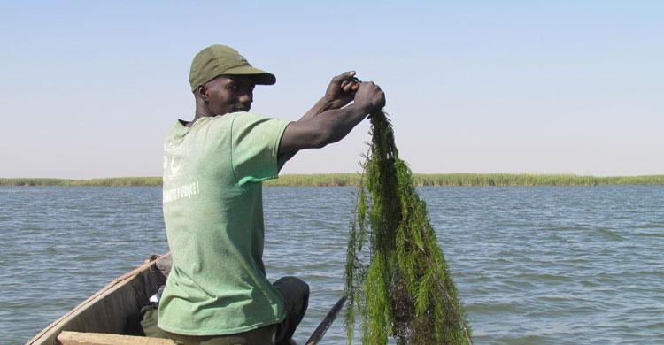 Clean-up session at Lac de Guiers © DPN Senegal