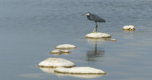 Urban wetlands - stepping stones for migratory waterbirds © Jacques Trouvilliez