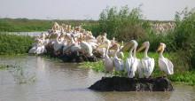 Great White Pelicans © Sergey Dereliev, www.dereliev-photography.com