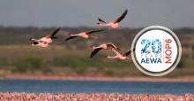 Lesser Flamingos (Phoeniconaias minor) ©  Mark D. Anderson