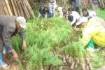 Sorting tree seedlings for planting on Berga watershed © EWNHS
