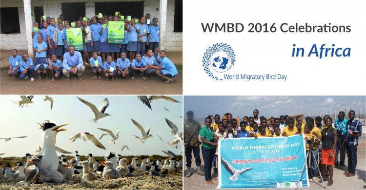 WMBD 2016 celebrations in Africa