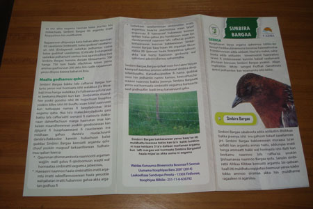 A brochure published in Amharic & Oromifa languages could help raise community awareness towards conservation of the White-winged Flufftail © EWNHS