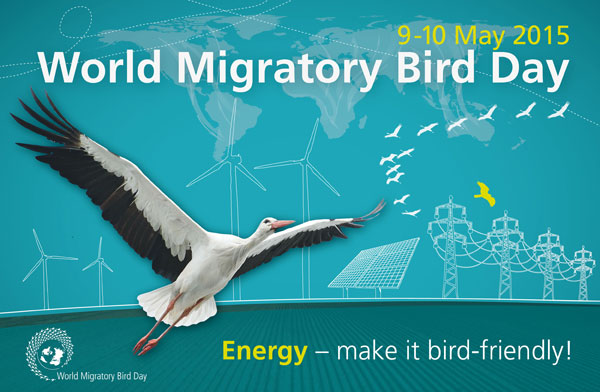 World Migratory Bird Day 2015