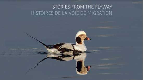 Stories from the Flyway