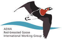 Red-breasted Goose  IWG logo